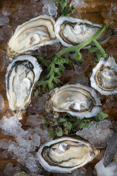 Oysters on crushed ice on a wood surface