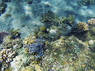 Tropical seashore underwater landscape. Coral reef diverse shapes.