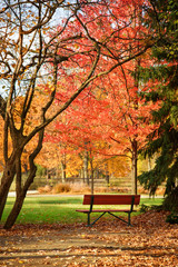 Empty bench at the colorful fall park