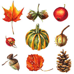 Autumn or fall objects set, pumpkin, leaves, acorn, fruits, cone