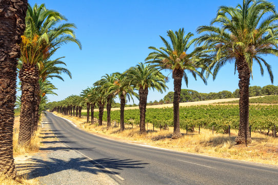 Seppeltsfield Road boasts some of the Barossa Valley's most famous vineyards, wineries and gourmet destinations - SA, Australia