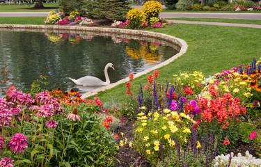 In de dag Zwaan Garden lake with swan and flowers.