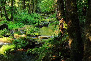 river in the green forest