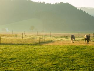 Pferdekoppel im Morgenlicht