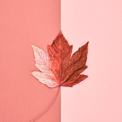 Close view of maple leaf