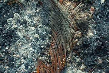 Metal carcass of the burnt automobile rubber tire