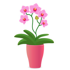 Vector illustration of a pink orchid flower in a flowerpot