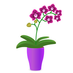 Vector illustration of a purple orchid flower in a flowerpot