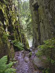 Ravine with green mossy walls.