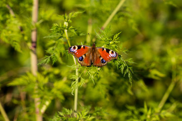 Butterfly resting on a green plant