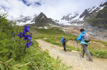 Transit of hikers with Aquilegia flowers in the foreground, Elisabetta Hut, Veny Valley, Courmayeur, Aosta Valley, Italy, Europe
