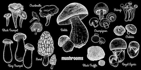 Mushrooms set illustration.