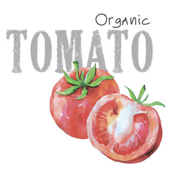Watercolor vegetables organic vector tomato isolated on white background