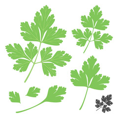 Set of fresh green parsley coriander vegetable leaves in flat style including silhouette icon. Vector illustration