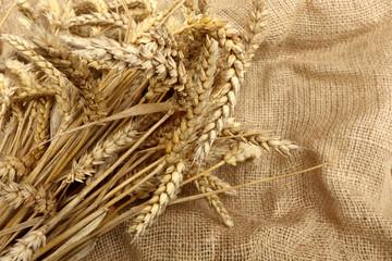 Weizen und Jute