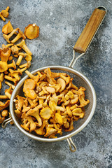 Heap of fresh uncooked forest mushrooms chanterelle in old colander over gray texture background. Top view with space