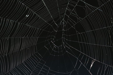 Spiderweb against a black background