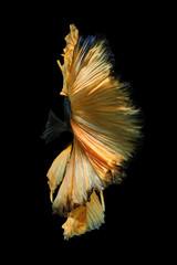 Foto op Plexiglas Vissen Yellow in Black edge