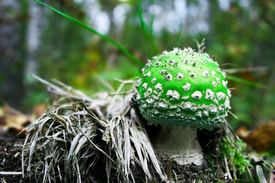 A green mushroom - a 1up! Sometimes in life you need an extra life, especially here in Finland, where when the fall comes, its pretty cold.