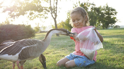 Girl feeding goose but goose attack and plucked her