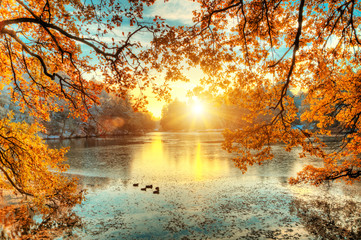 Self adhesive Wall Murals Orange Glow Beautiful colored trees with lake in autumn, landscape photography