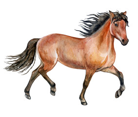 Beautiful purebred red horse isolated on white background. Watercolor. Illustration. Template. Picture