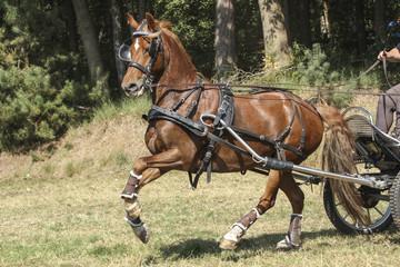 Door stickers Horses Bruin paard galoppeert voor de kar
