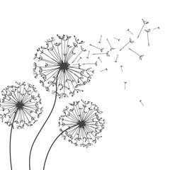 Dandelions flower. Vector abstract dandelions for background design. Vector Illustration of Dandelion fof greeting card. Flying Dandelion black. Abstract dandelion background