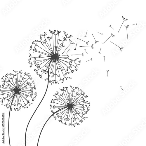 Dandelion Flower Line Drawing : Quot dandelions flower vector abstract for