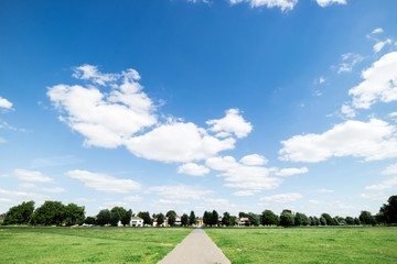 Green field and blue sky background.