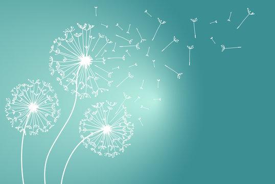 Dandelions flower. Vector abstract dandelions for background design. Vector Illustration of Dandelion fof greeting card. Flying Dandelion black. Abstract dandelion background