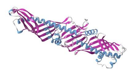 CETP protein molecule, illustration
