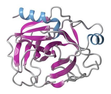 Trypsin digestive enzyme molecule, illustration