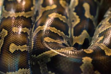 Snake skin pattern close up