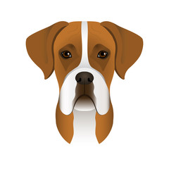 Isolated colorful head and face of german boxer on white background. Line color flat cartoon breed dog portrait