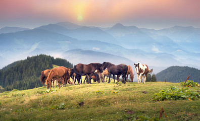 Wall Mural - Free Carpathian stallions