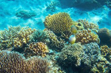 Sea fish wildlife in coral reef. Tropical seashore inhabitants underwater photo.