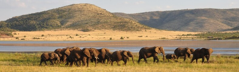 Elephant herd in beautiful surroundings