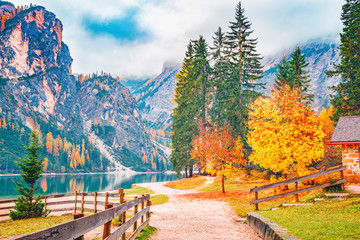 Fall scenery of lake Braies - lago di Braies at Alps background in South Tyrol in Italy. European famous and very popular travel destination. Autumn landscape with yellow leaves trees at bank of lake.