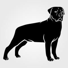 Dog Rottweiler icon isolated on white background.