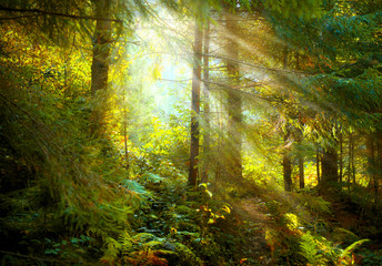 Autumn scene. Misty old forest with sun rays, shadows and fog