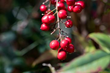 bunch of berries closeup