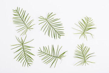 Green leaves on the white background. Top view. Cypress vine leaves.