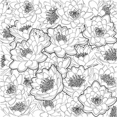 vector ornament pattern gentle black and white flowers Water lilies