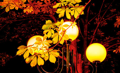 City lantern and leaves of a chestnut tree at the autumn night