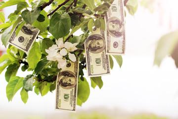 Dollars grow on trees in the garden