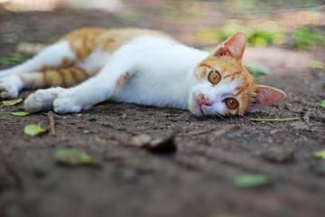 Cat lying  outdoor in fall.