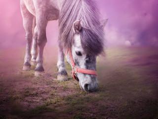 Pony on grass