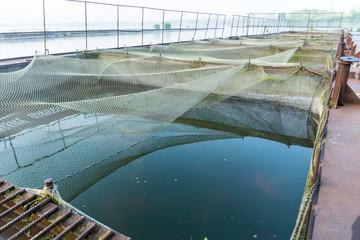 fish farm on the lake