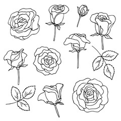 vector contour illustration of rose flowers